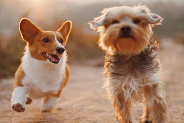 Dermatologie voor Dieren : DE specialist voor alle huidproblemen bij hond, kat en andere gezelschapsdieren. Via onze website vind u de eerste relevante informatie. Professioneel, eerlijk advies en behandeling !